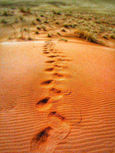 desert-dune-dunes-65562.jpg
